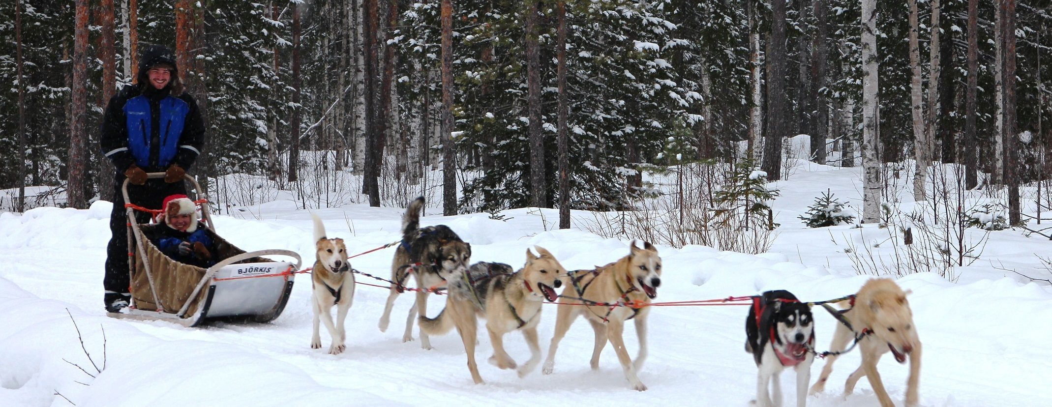 f5b9dcc512 Visit a Husky Farm and All Day Safari - Lapland Welcome in Finland