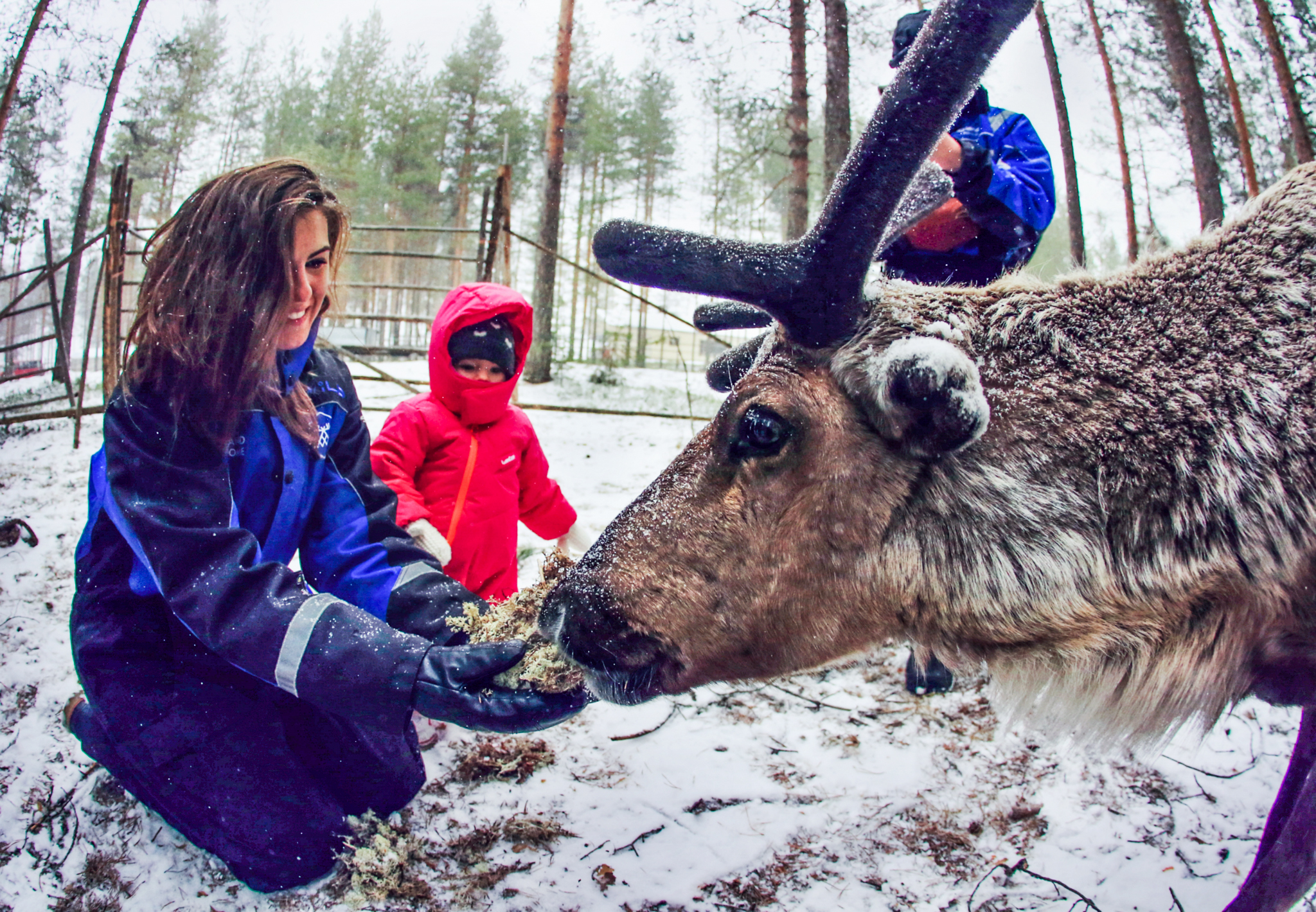 woman and child feeding a reindeer at a farm