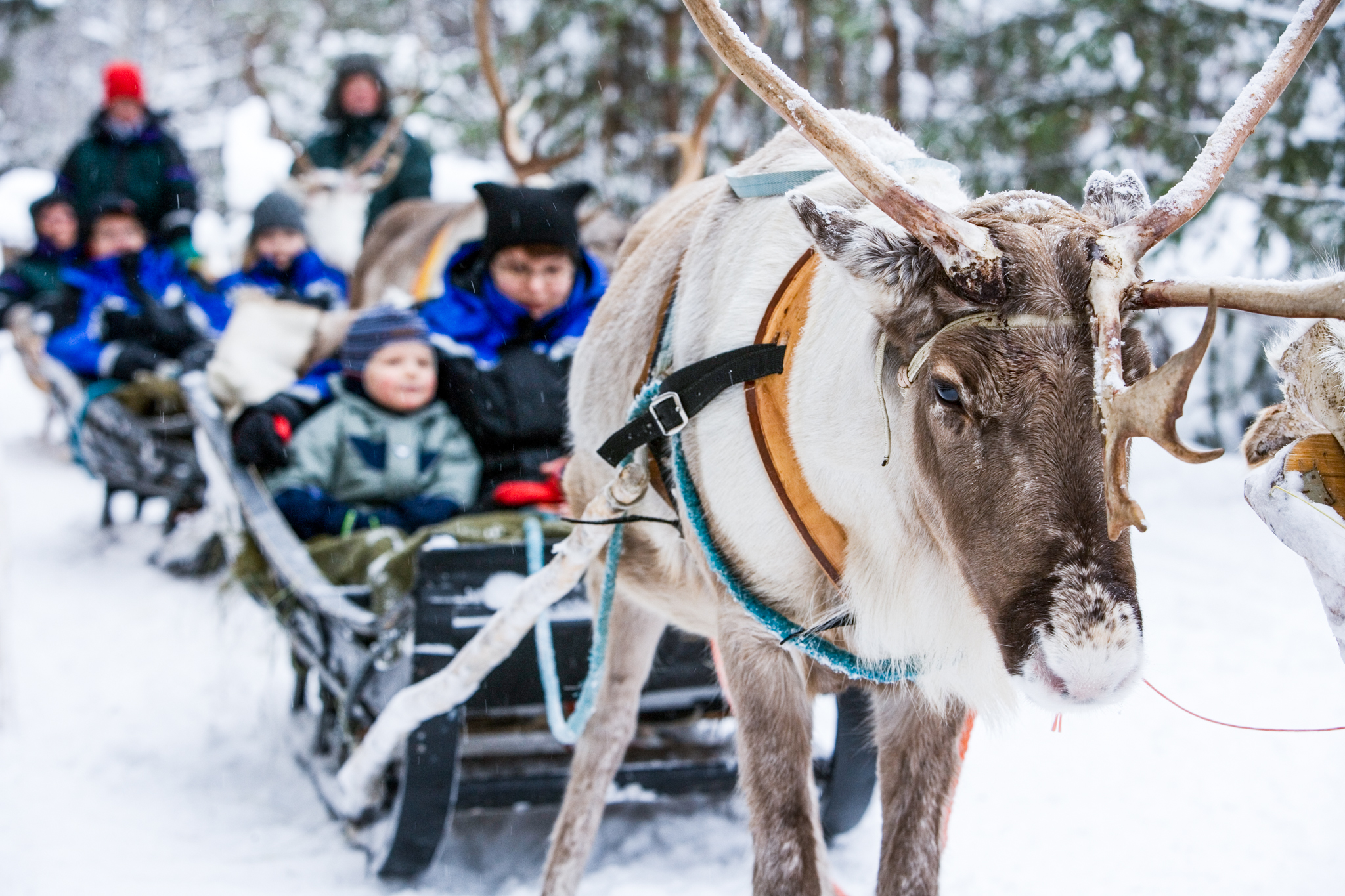 reindeer pulling sleight with woman and child
