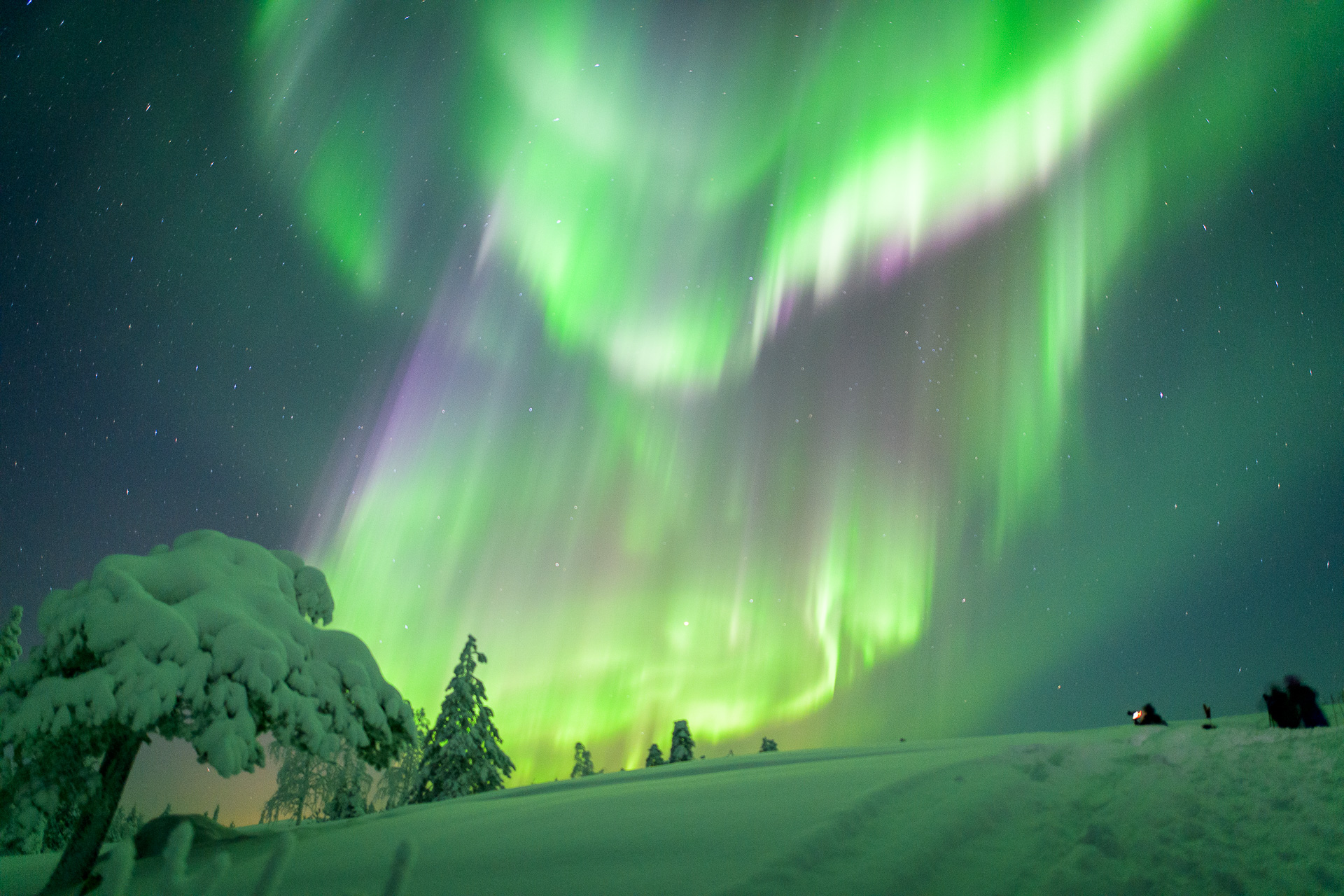 Northern Lights in the snowy forest