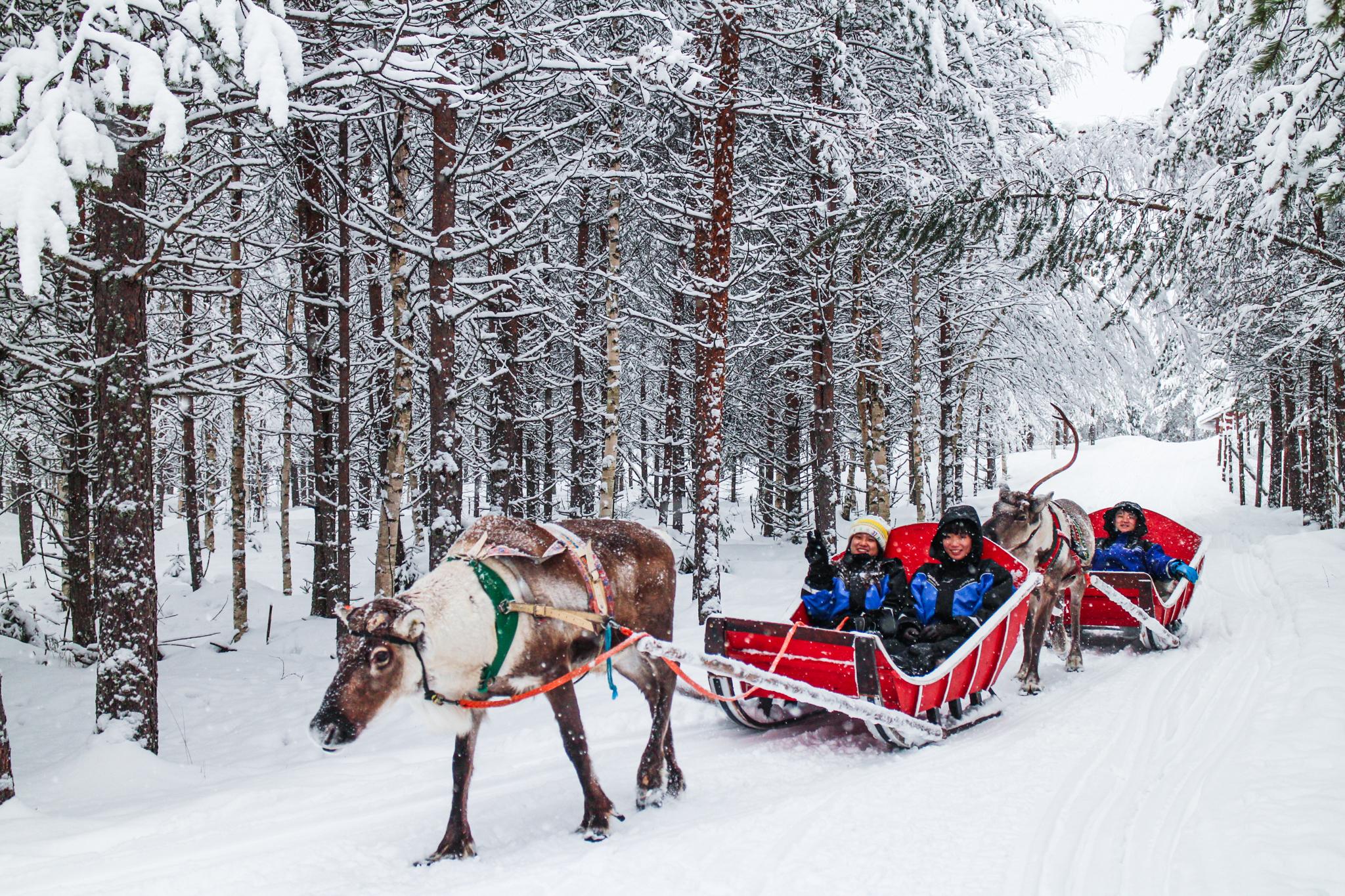 Reindeer Farm Sleight Ride