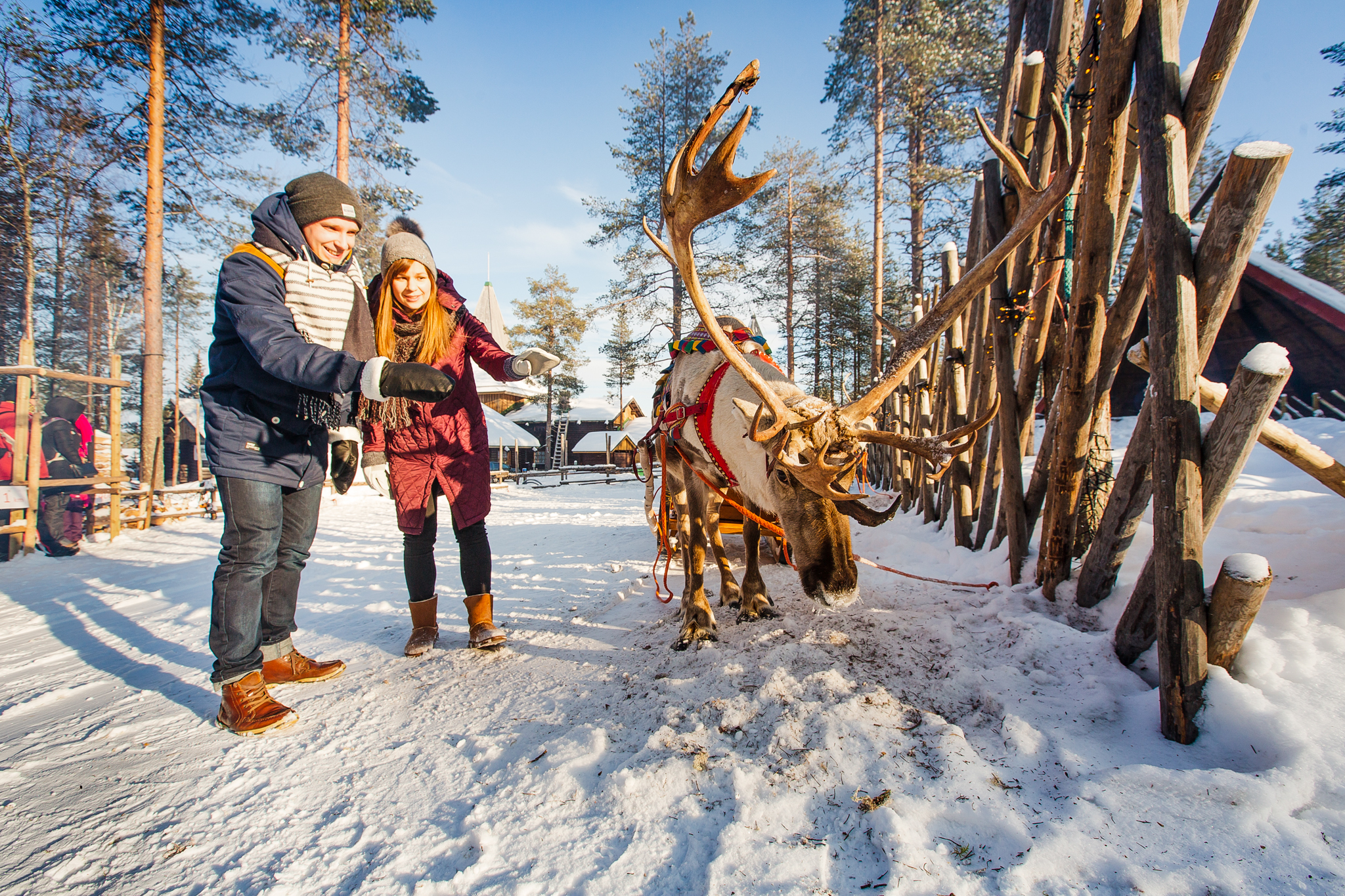 two people next to a reindeer on a farm