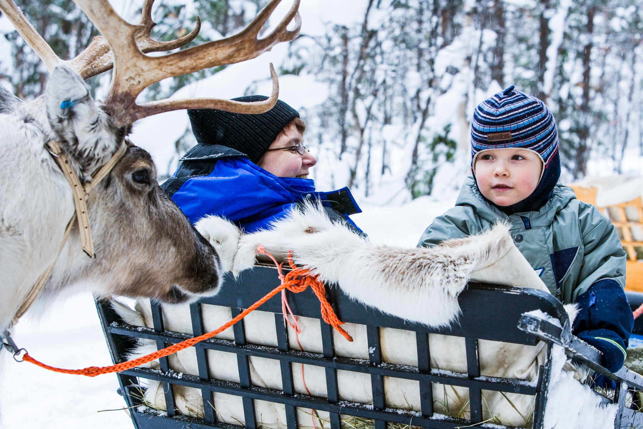 woman and child in reindeer sleight with reindeer
